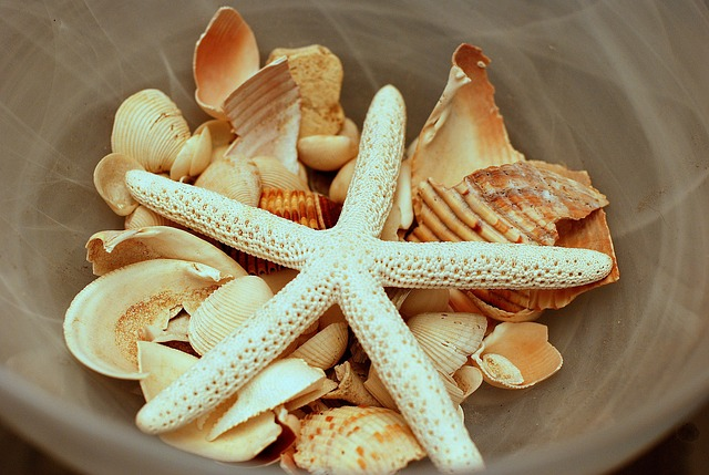 Summer seashells for DIY decor
